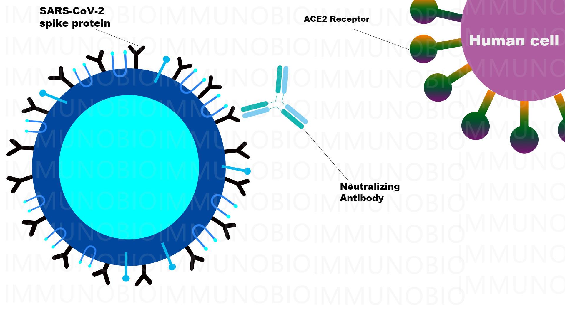 COVID 19 antibody test