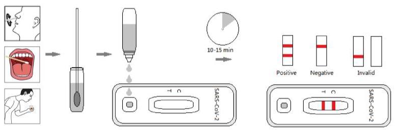 COVID Antigen Test Kit